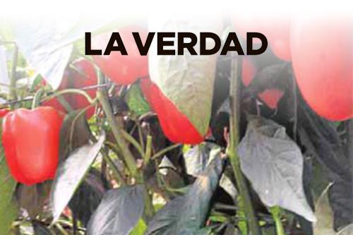 La agricultura, motor de futuro para la Región de Murcia