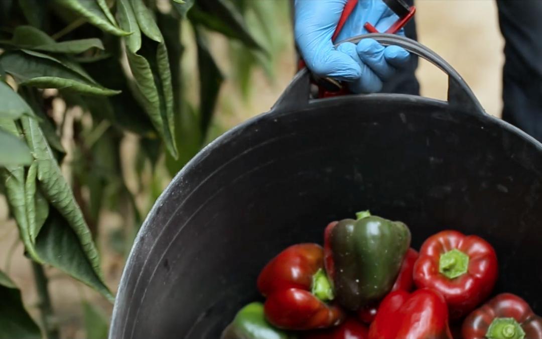 La agricultura, motor de futuro de la Región de Murcia