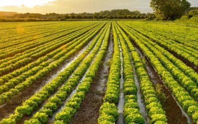 Jornada sobre virosis en cultivos hortícolas
