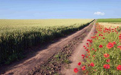 La importancia de la agricultura en el Medio Ambiente – Vía Sigfito