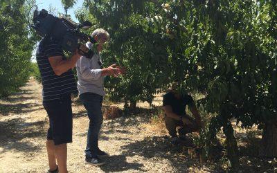 Reportaje de España Directo sobre el uso eficiente del agua en la agricultura
