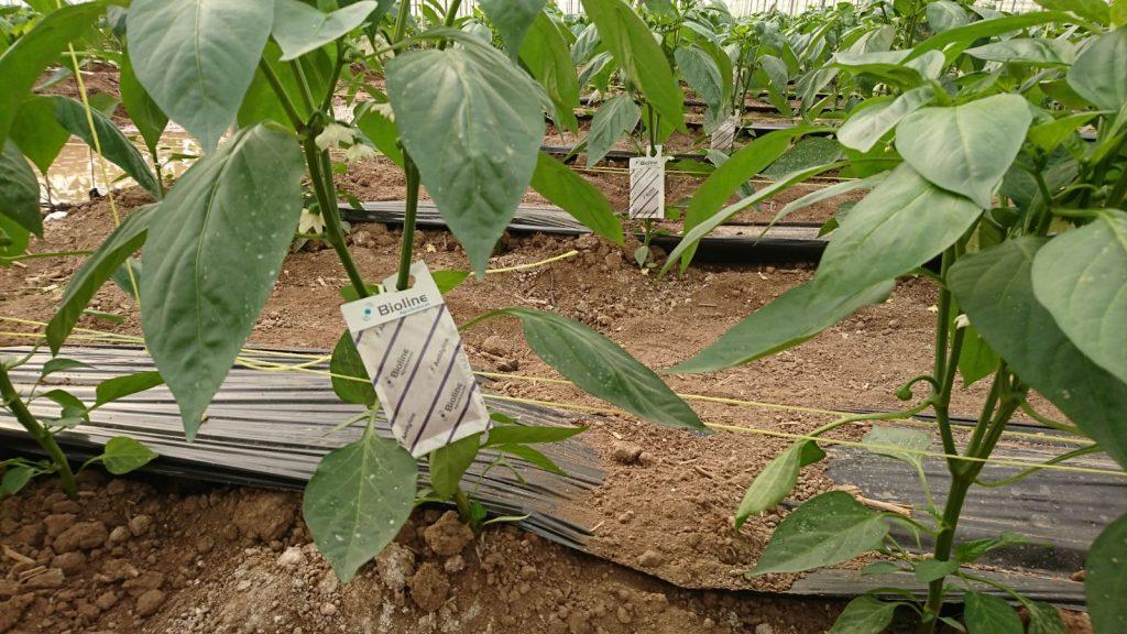agricultura-sostenible