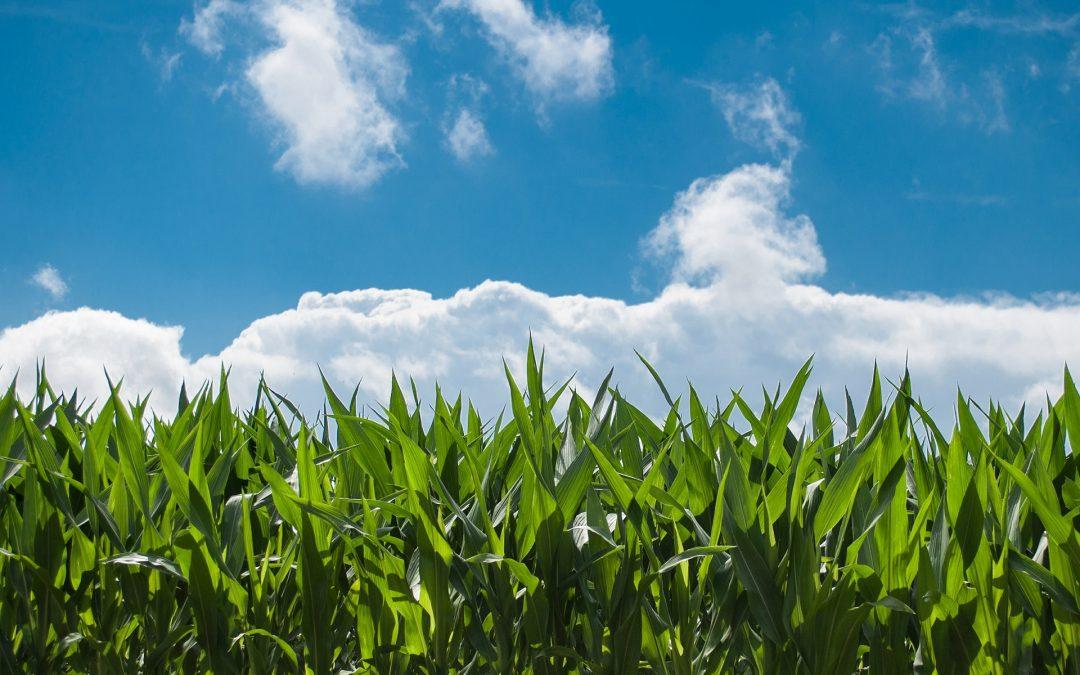 """¿Qué es la """"Agricultura Sostenible""""?"""