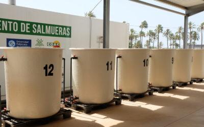 Biorreactores con madera de cítrico en la Finca Tomás Ferro.